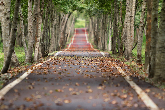 Walking the long-term road is more complicated than simply saying you'll do it.