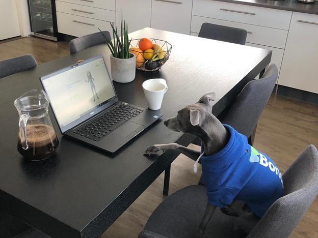 Bondora launches pet investment platform on 1 April 2021.